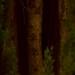 Cypress Tree (Close Up) by Philip J. Harris
