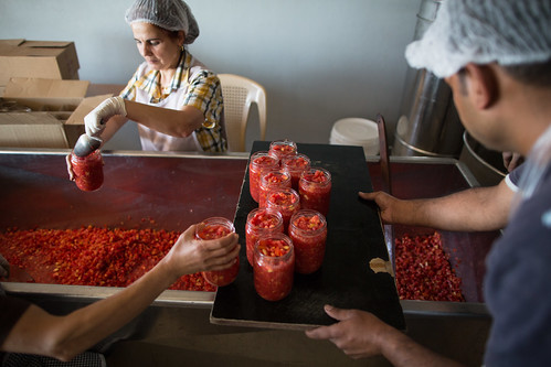 Diced tomatoes are put into jars at a processing unit. Wataneh helps food processors improve the quality of the final product.