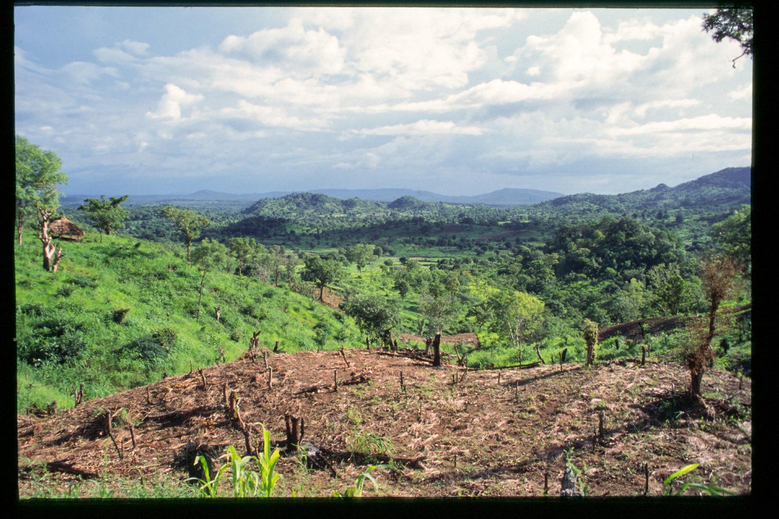 Senegal - Collines et forêts du pays bassari