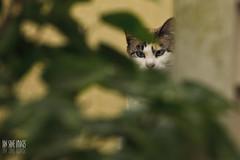 My Cat Is Stalking Me