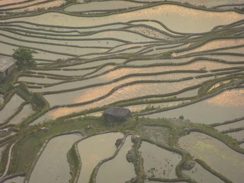 Yunnan13-Yuanyang 24-Bada (47)