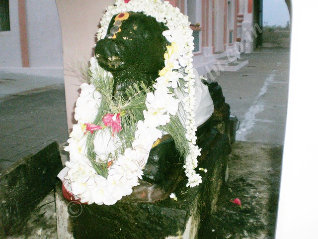 Nandi at Karumbeswarar Temple, Thirukkanur
