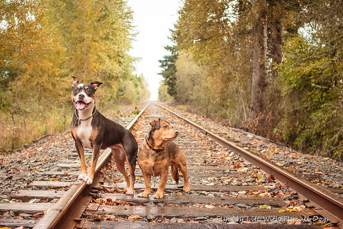 Train Tracks-9516