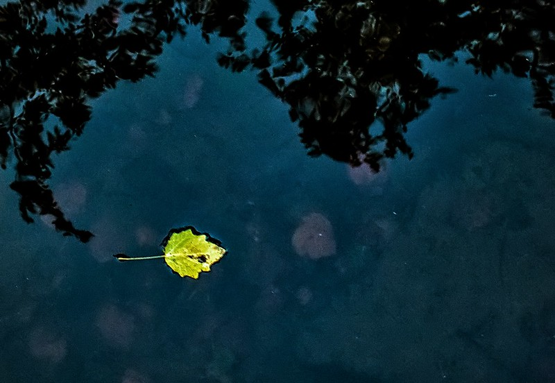 leaf n reflections