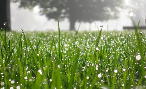 macro vert paysage verdure