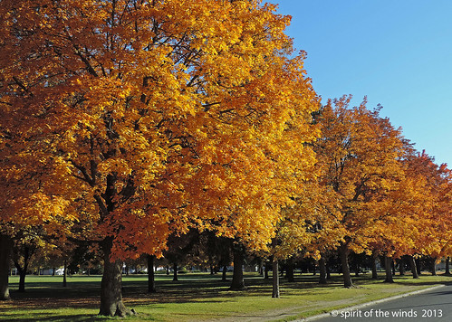 autumn fall nikonflickraward
