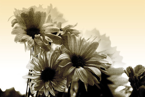Various Floral