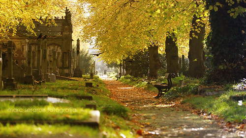 a walk along the Brompton Cemetery