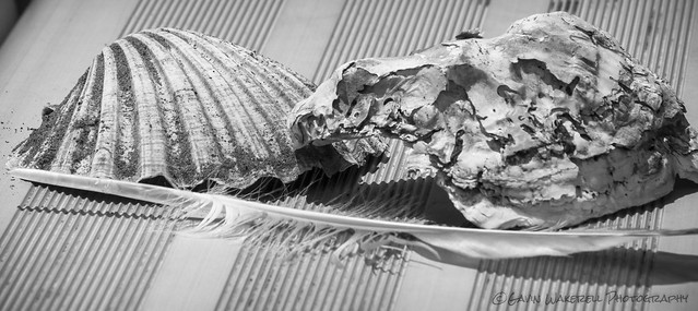 Shells & Feather