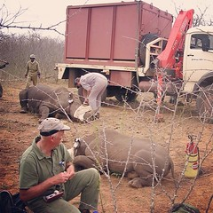 Translocating black rhinos to safer habitat. | Every 9 hours, another rhino is poached in South Africa. Let's give them a hand and stop poaching now! #5rhinos5wishes http://bit.ly/1eHvstJ)