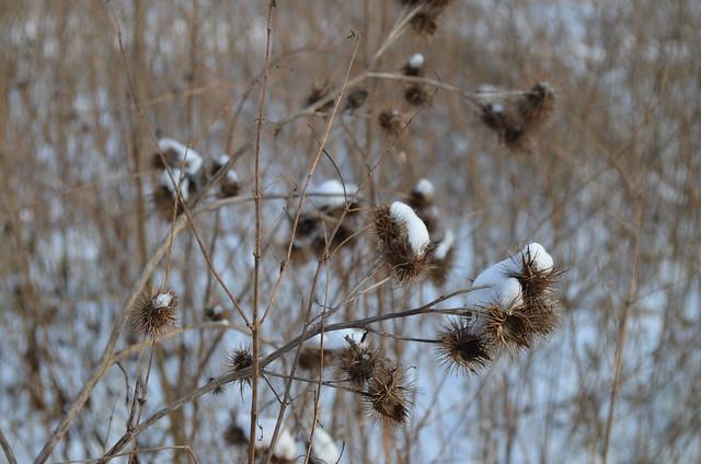 Snow day in Pankow Volkspark Schönholzer Heide snowy plants