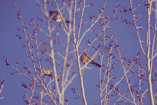 More bird watching