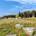 Spring at Hierapolis-Pamukkale, Turkey (UNESCO world heitage site) by Maria_Globetrotter