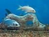 tropical-fish-coral-custom-tank-aquarium-sarasota-fl-7