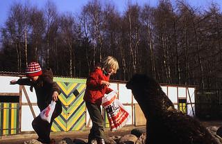 HdJ Kro: Tagesfahrt zum Tierpark Gettorf (07)