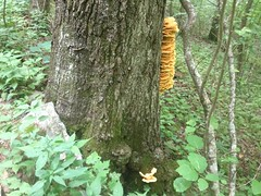Fungus With Millipedes