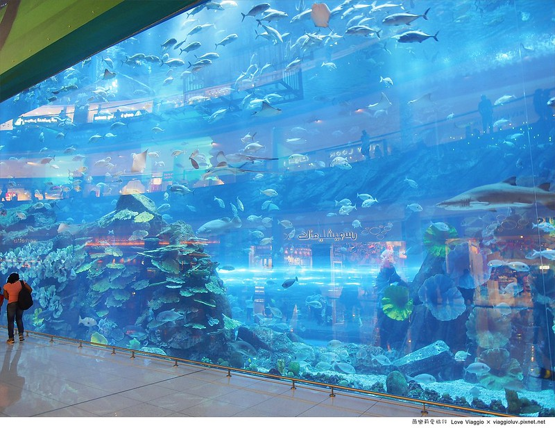 【杜拜 Dubai】The Dubai Mall 杜拜購物中心及世界最大的室內水族館Dubai Aquarium