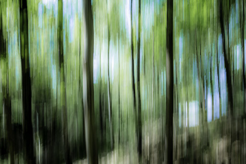 trees abstract forest göteborg landscape photography photo woods europe photographer image sweden gothenburg may fav20 photograph f22 100 sverige 24mm scandinavia fav30 panning fineartphotography goteborg kungsbacka halland tiltshift architecturalphotography västragötaland commercialphotography fav10 2013 architecturephotography tse24mmf35l houstonphotographer ¼sec eos5dmarkiii mabrycampbell may272013 201305270h6a2441