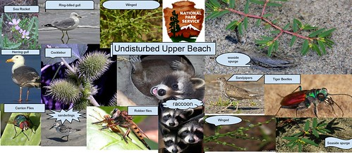 Undisturbed Upper Beach Community-page-001