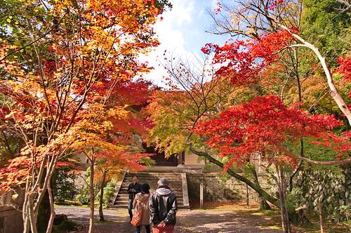 【写真】2012 紅葉 : 光明寺/2020-11-11/IMGP6511