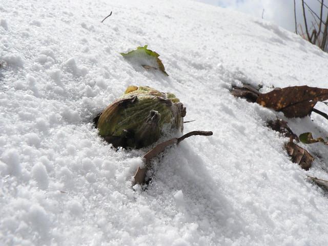 そこまで来ていた春に,雪が覆い被さる.