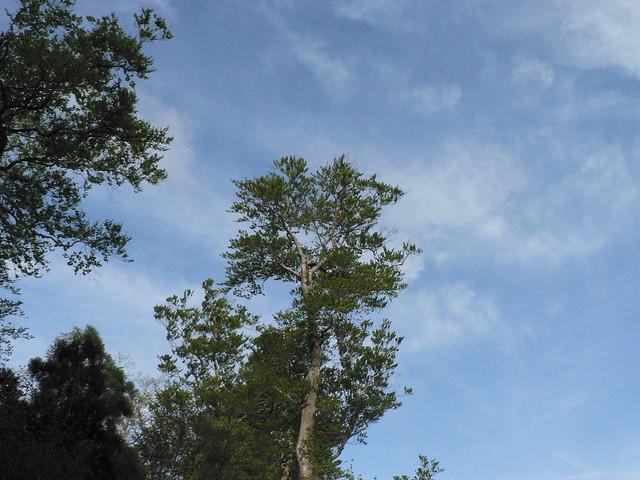 観察会開始より2時間が経過.風は冷たかったが,青空が広がった.