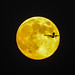 Harvest Moon Meets Airliner