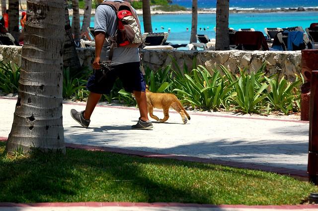 Lion on the beachwalk