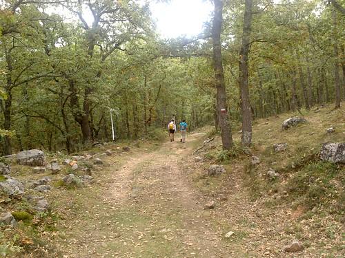 Bosques de hayas, robles