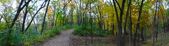 Panorama of a walk in the woods, Fall in the Arb, Ann Arbor