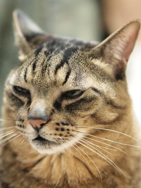 寝正月が終わってもまだ猫は寝る