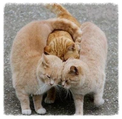 group hug 5