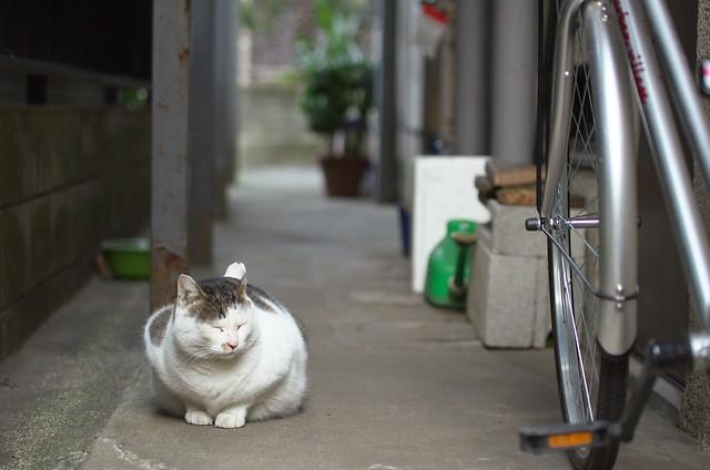 東京路地裏散歩 谷中フォトウォーク 2014年1月19日