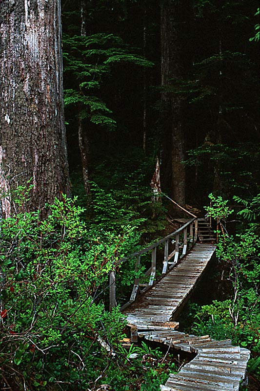 Boardwalk in Carmanah Walbran Park, Vancouver Island, British Columbia, Canada