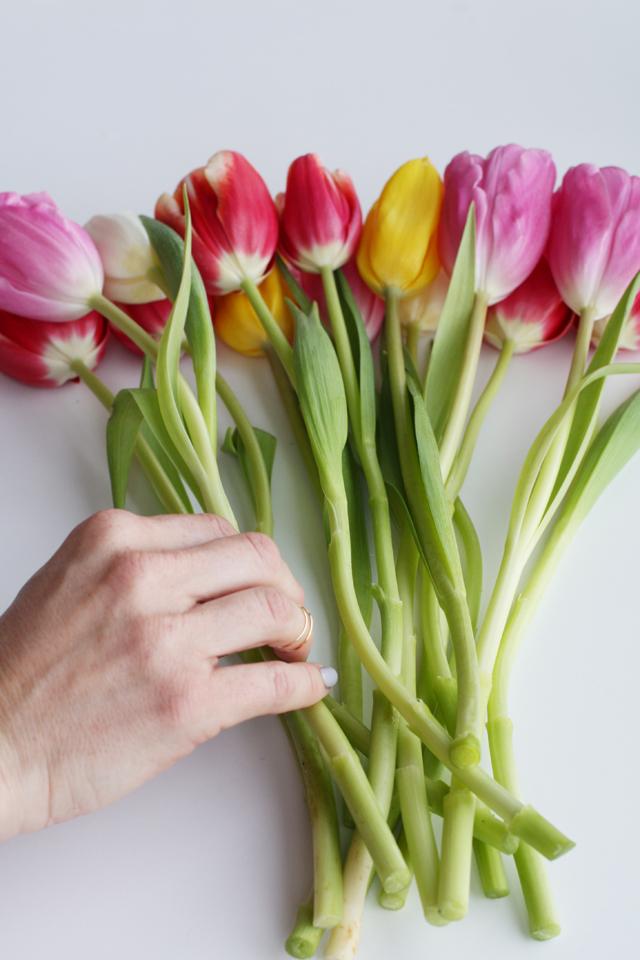 2nd row tulips