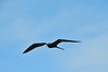 FL 20140204 196 - Key West (Dry Tortugas National Park) by 十二楼 . 寂寞 . 恋人