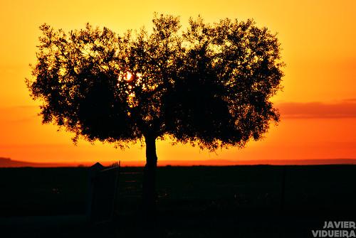 sunset landscape atardecer country paisaje campo ilex encina