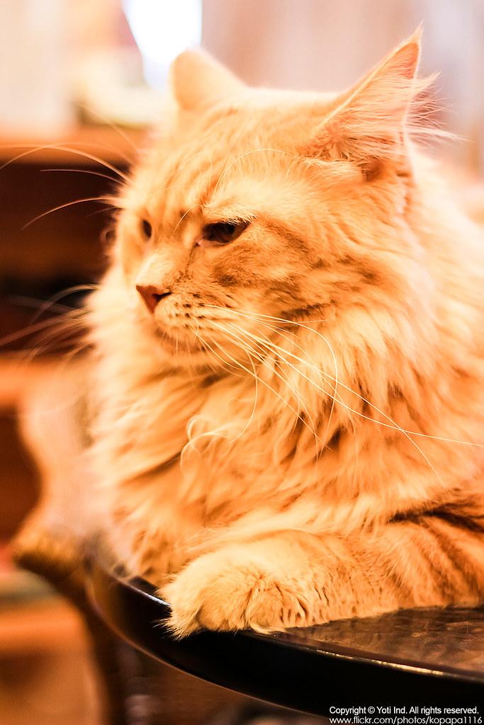 元氣貓主題餐廳 IMG_6115