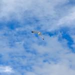 Porto - seagull