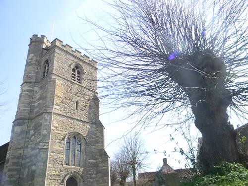 Cuddington Church with pollard