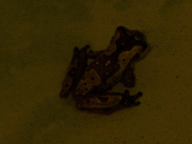 tree-frog-in-full-cammo