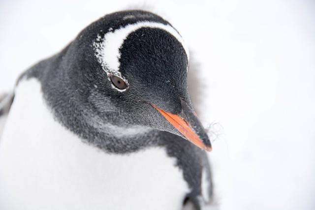 2015-03-08 16-17-29 Antarctic 1752.jpg
