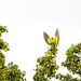 Parakeets in the Garden by alexjohnston89