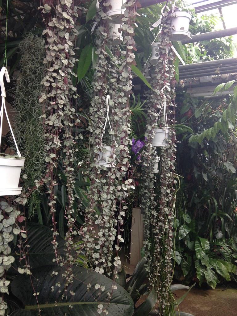 Orchidarium de Prangins 19300772092_3cb49e5beb_b