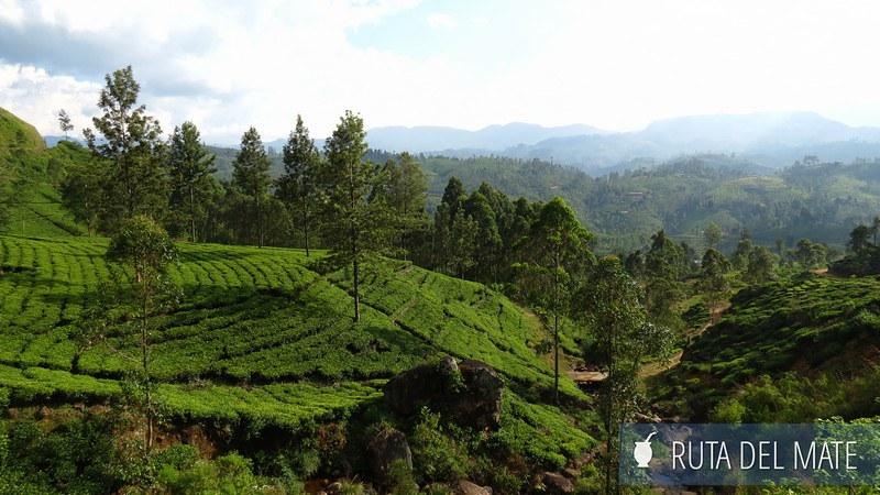 Haputale Sri Lanka (5)