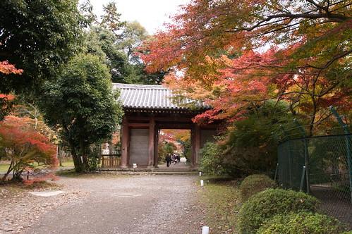 【写真】2012 紅葉 : 醍醐寺/2020-08-07/IMGP6853