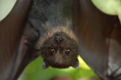 monkey(0.0), primate(0.0), nose(1.0), animal(1.0), macro photography(1.0), fauna(1.0), close-up(1.0), kinkajou(1.0), bat(1.0), eye(1.0), wildlife(1.0),