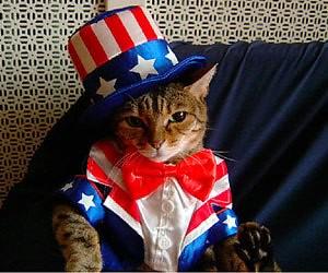 militant kitty