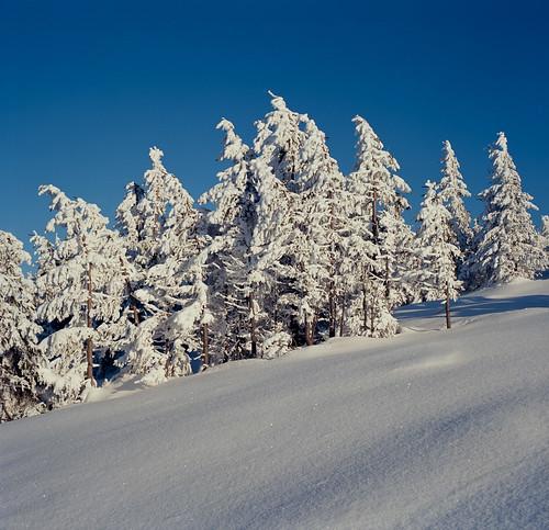 blue trees sky snow film analog day poland polska śnieg ektar szrenica dolnyśląsk epsonv750 kodakektar100 fujifilmgf670 gf670 f0213 negfix8 tetenal2bathkit pwwinter
