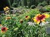 fiori d'orto botanico